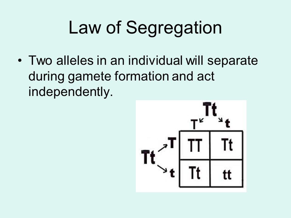 Law of Segregation Two alleles in an individual will separate during gamete formation and act independently.