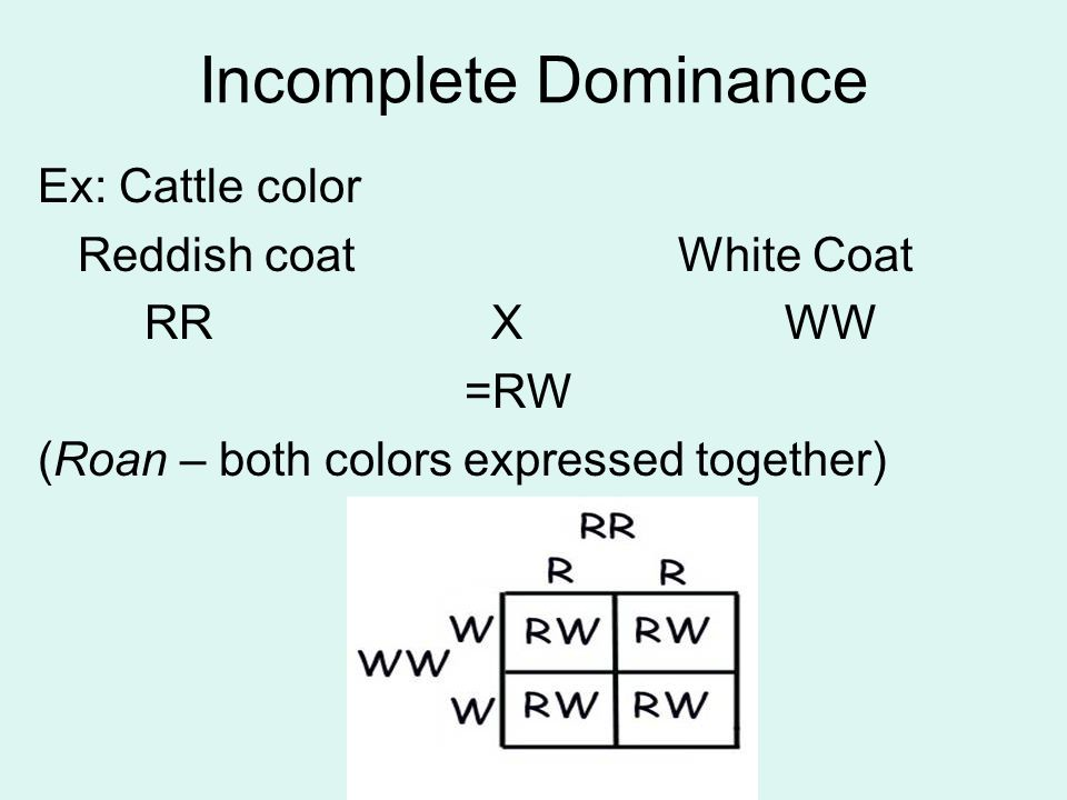 Incomplete Dominance Ex: Cattle color Reddish coat White Coat RR X WW