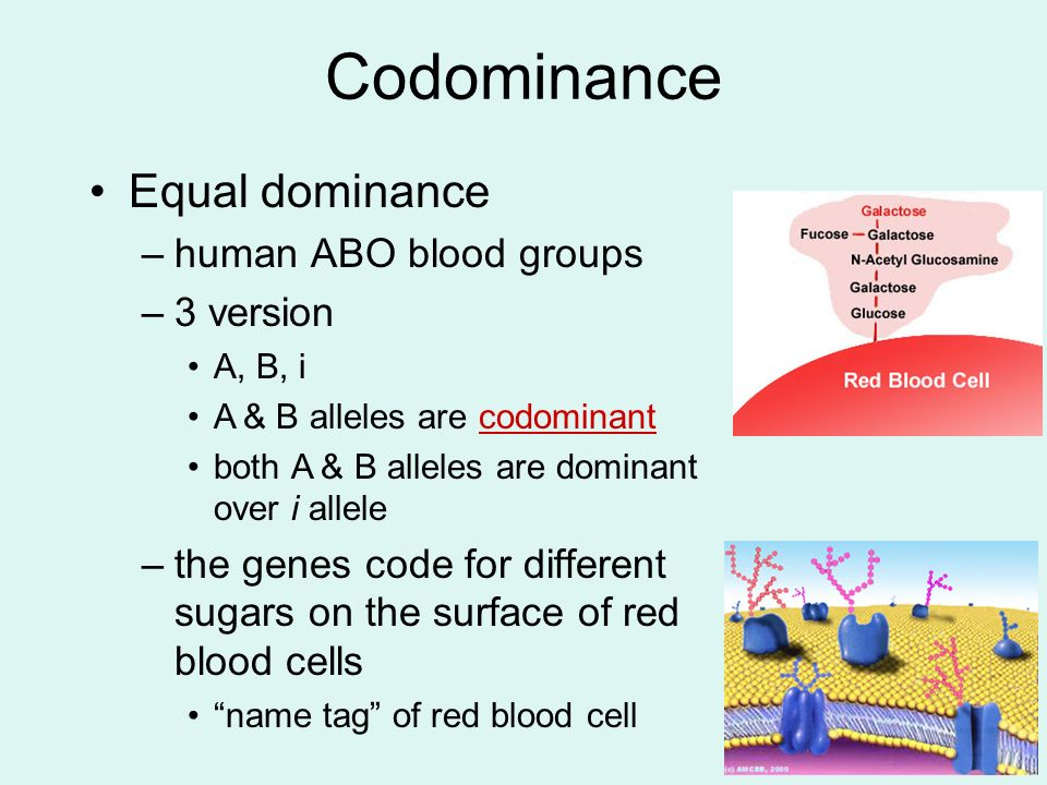 Codominance Equal dominance human ABO blood groups 3 version