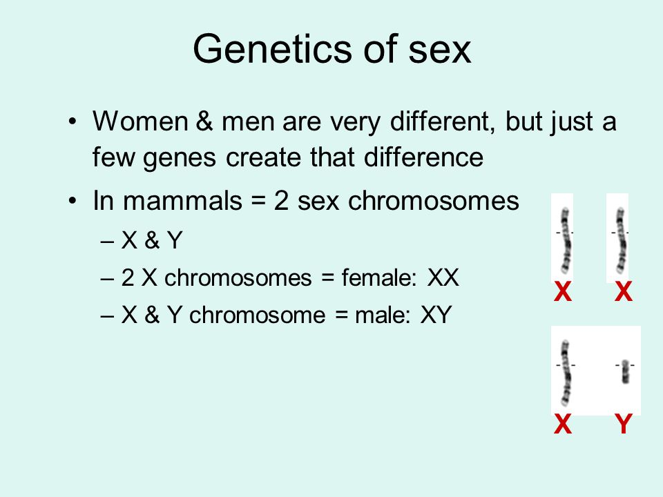 Genetics of sex Women & men are very different, but just a few genes create that difference. In mammals = 2 sex chromosomes.