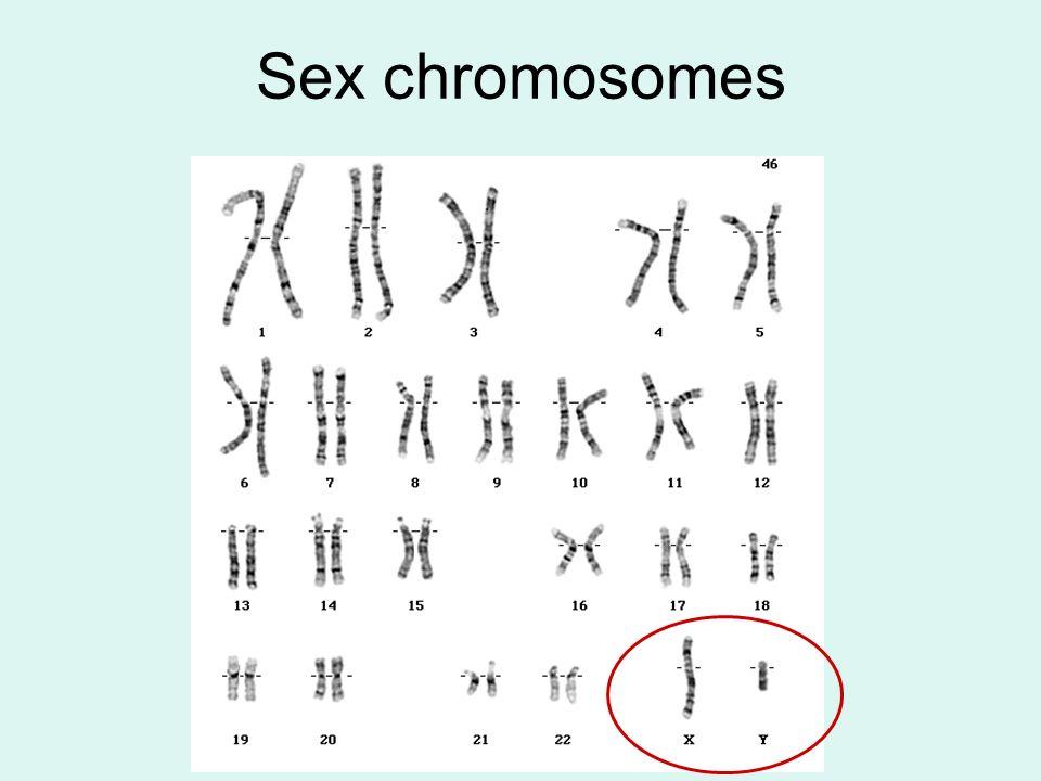 Sex chromosomes 76