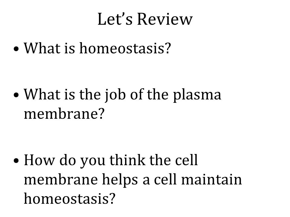 Let's Review What is homeostasis