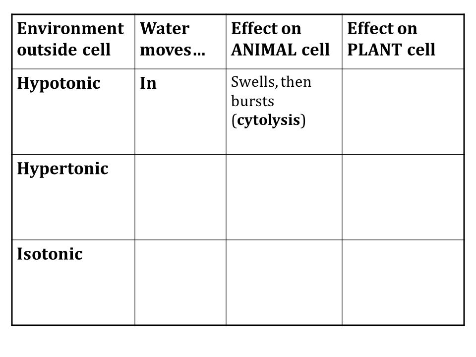 Environment outside cell Water moves… Effect on ANIMAL cell