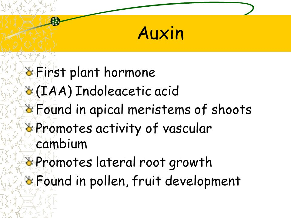 Types of Plant Hormones