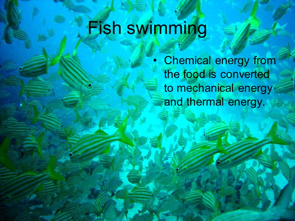 Energy transformations ppt download for Fish on energy