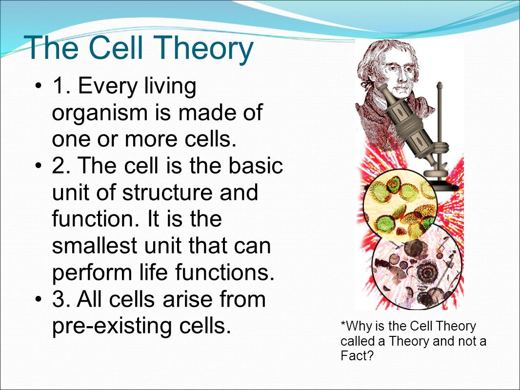 Ribosomes In A Plant Cell Objectives List scient...