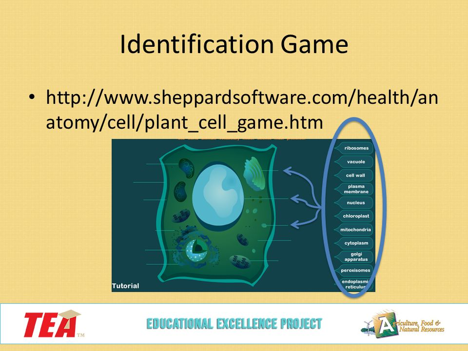 Sheppard software health anatomy cell