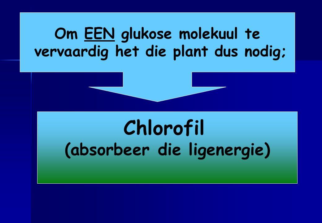 Chlorofil Ensiemes (absorbeer die ligenergie)