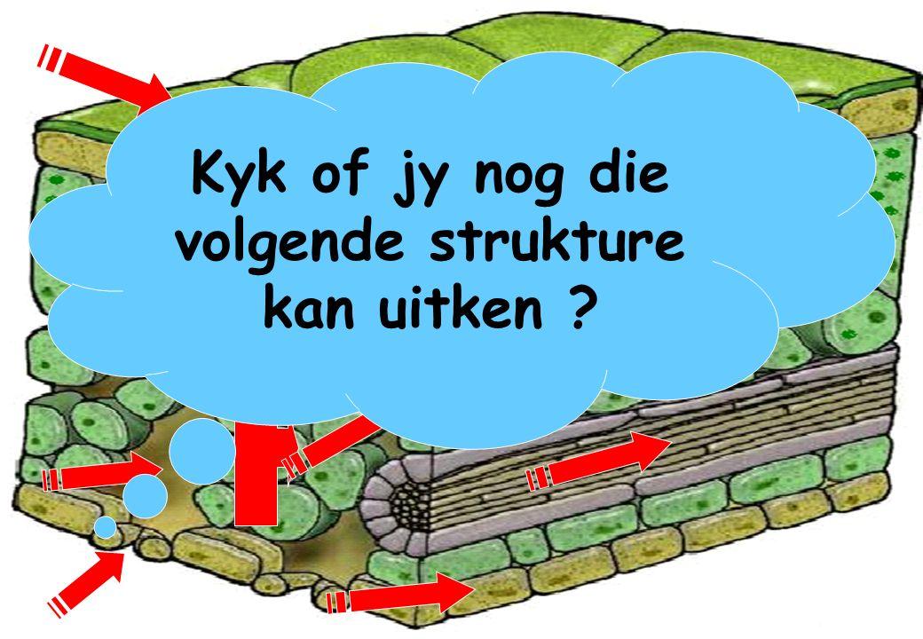 Kyk of jy nog die volgende strukture kan uitken