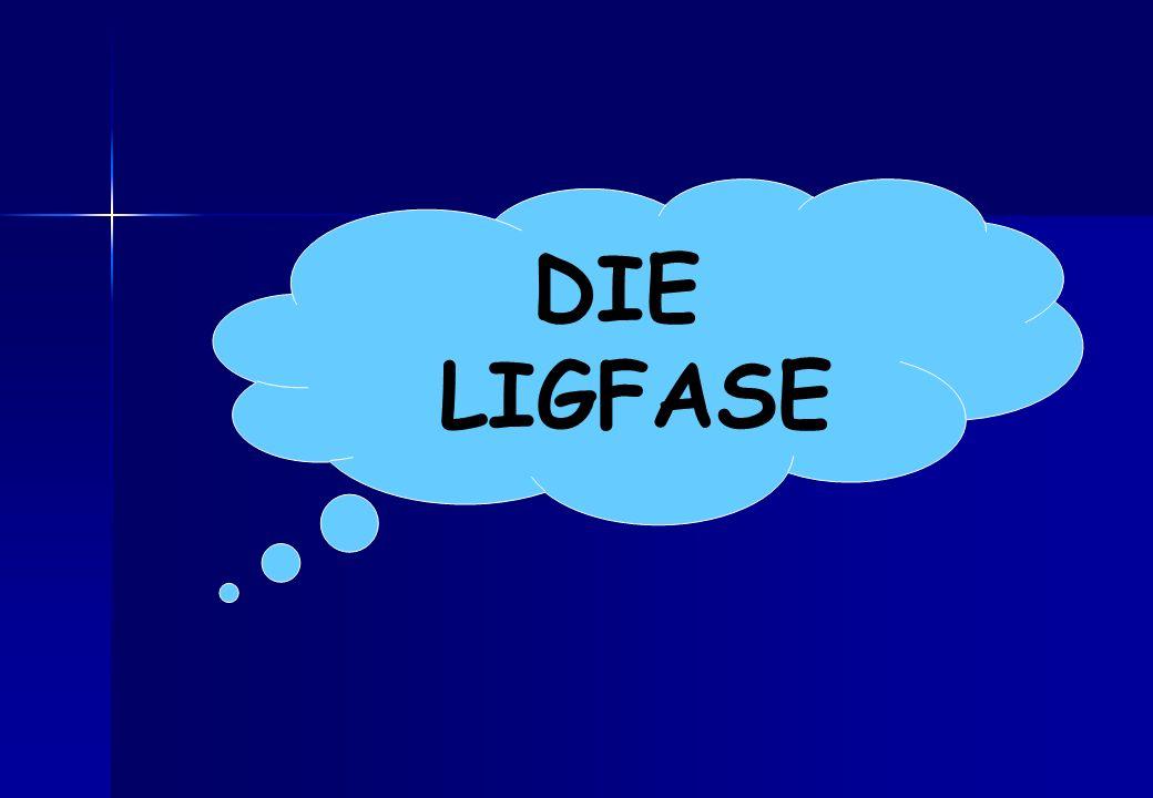 DIE LIGFASE