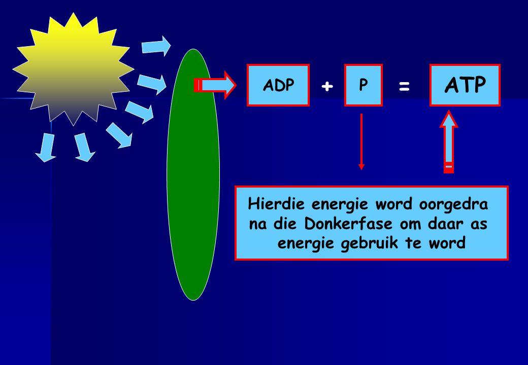 + = ATP ADP P Hierdie energie word oorgedra