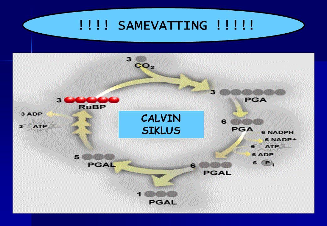 !!!! SAMEVATTING !!!!! CALVIN SIKLUS