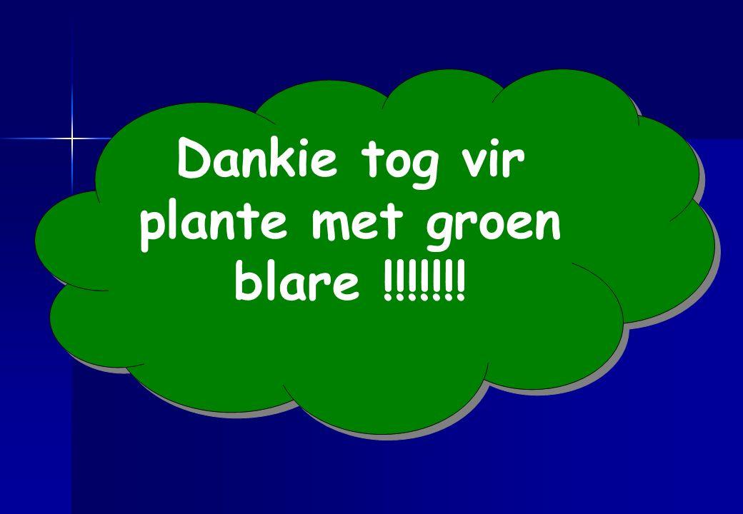 Dankie tog vir plante met groen blare !!!!!!!