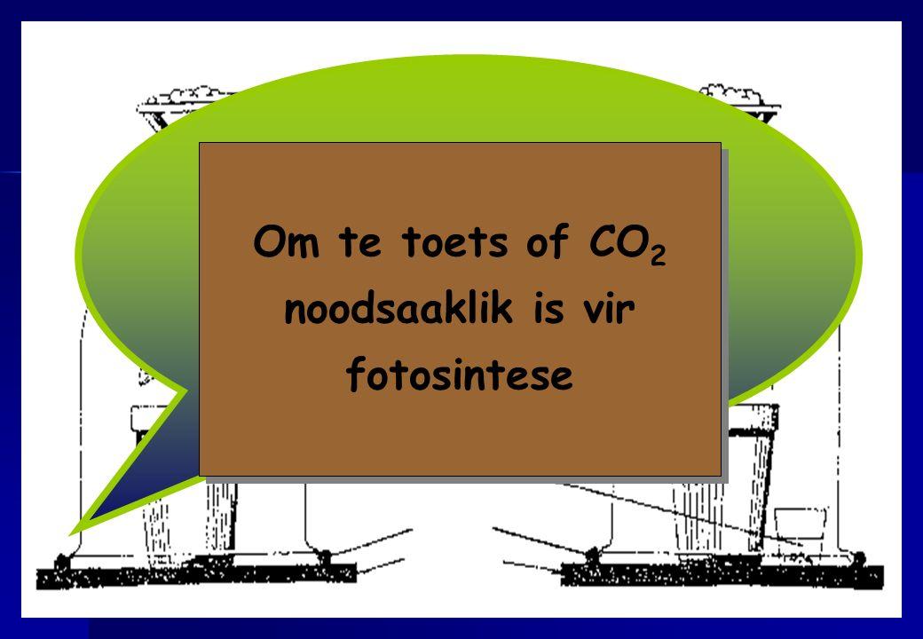 Om te toets of CO2 noodsaaklik is vir fotosintese