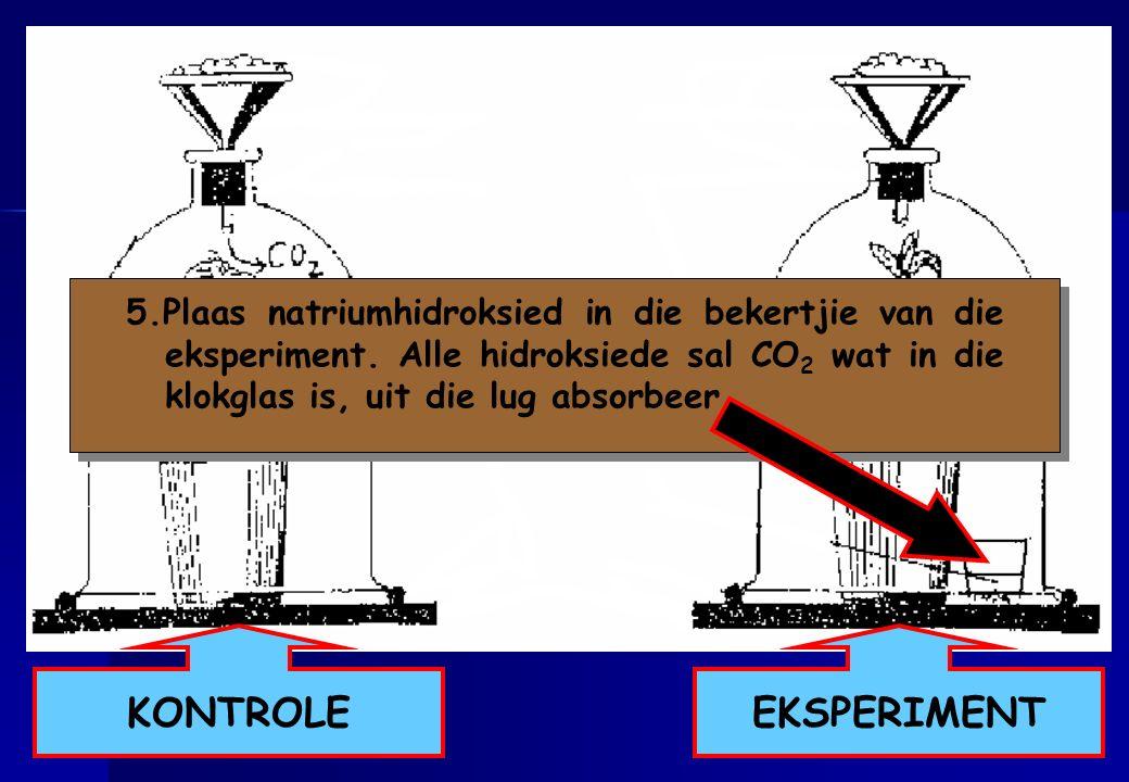 5. Plaas natriumhidroksied in die bekertjie van die eksperiment