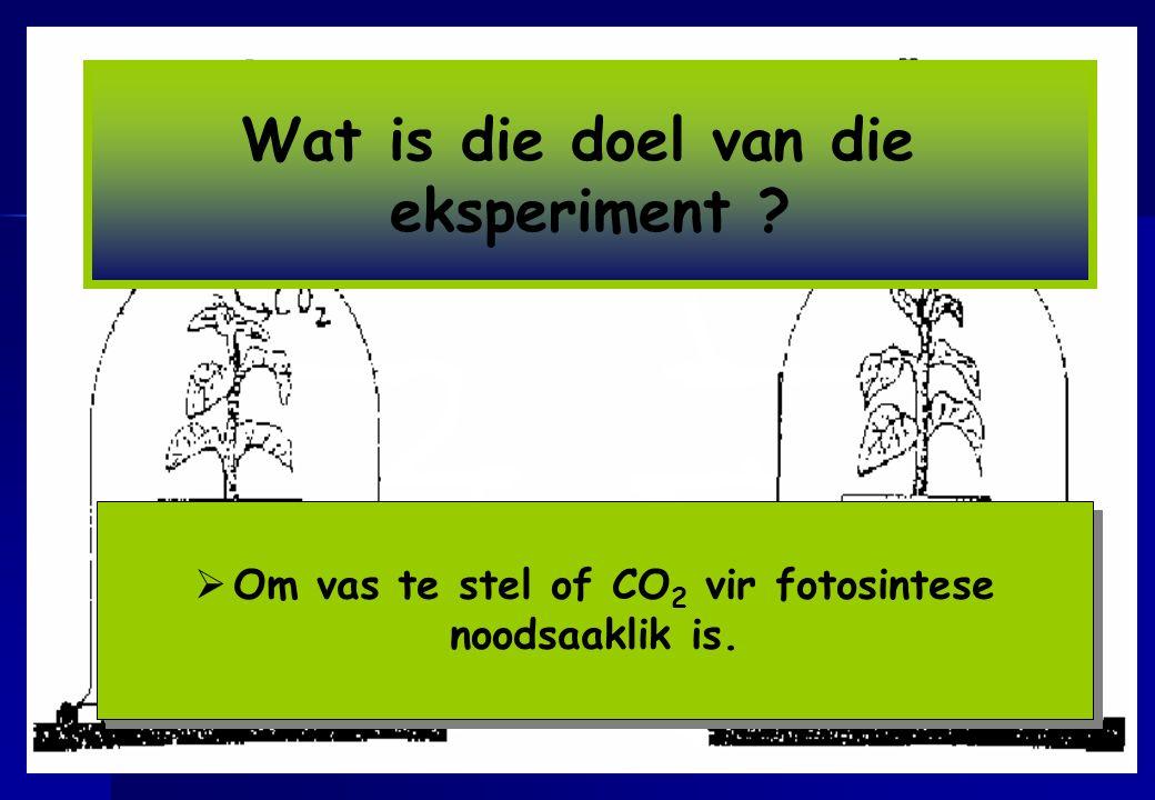 Om vas te stel of CO2 vir fotosintese noodsaaklik is.
