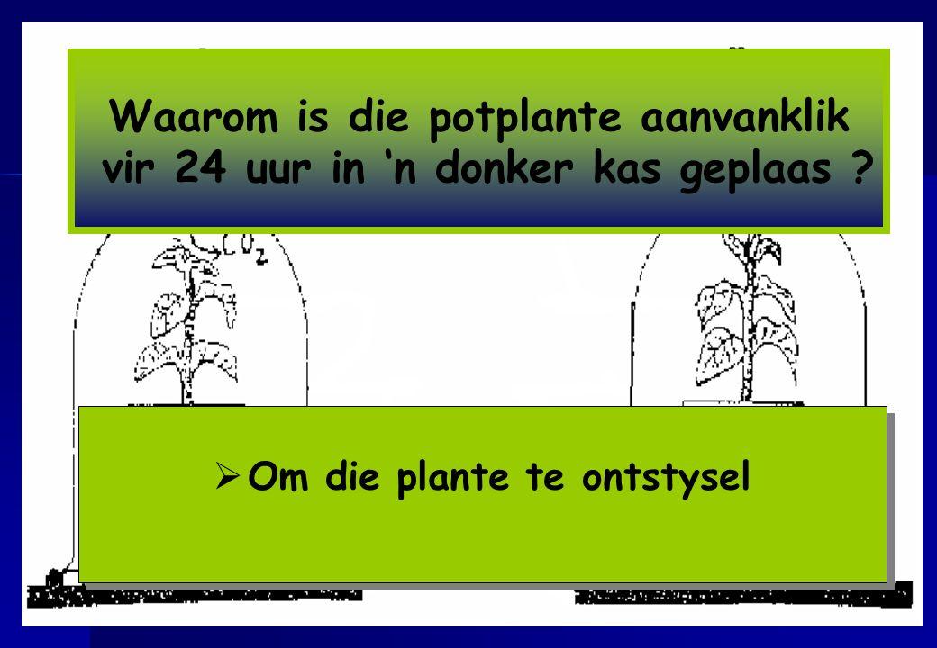 Waarom is die potplante aanvanklik