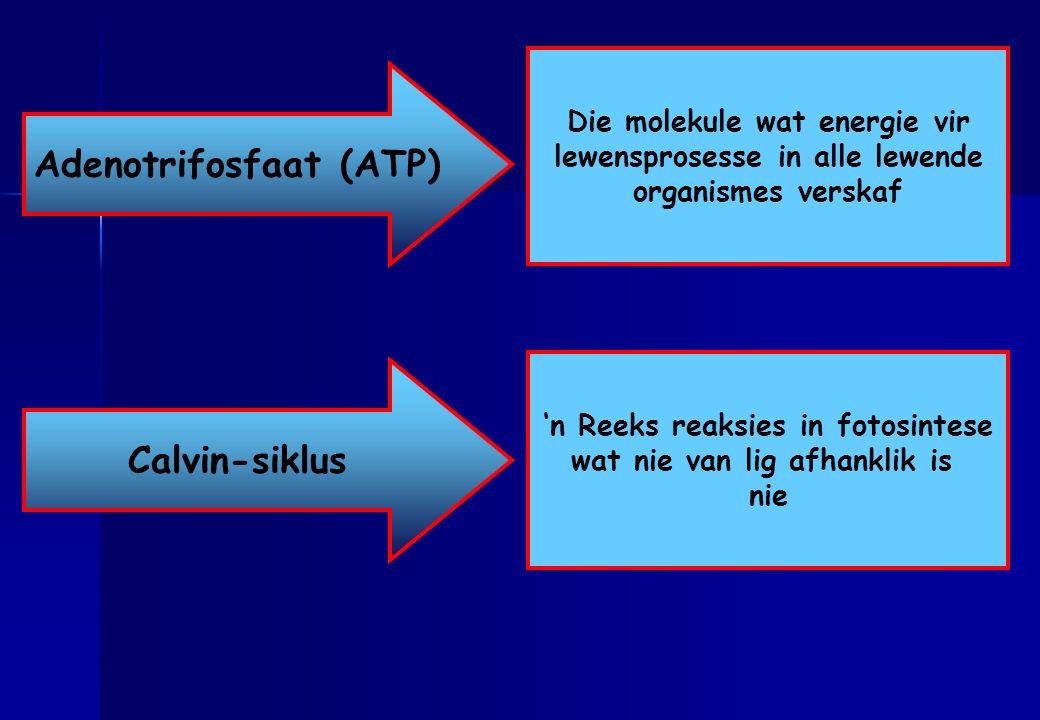 Adenotrifosfaat (ATP) Calvin-siklus