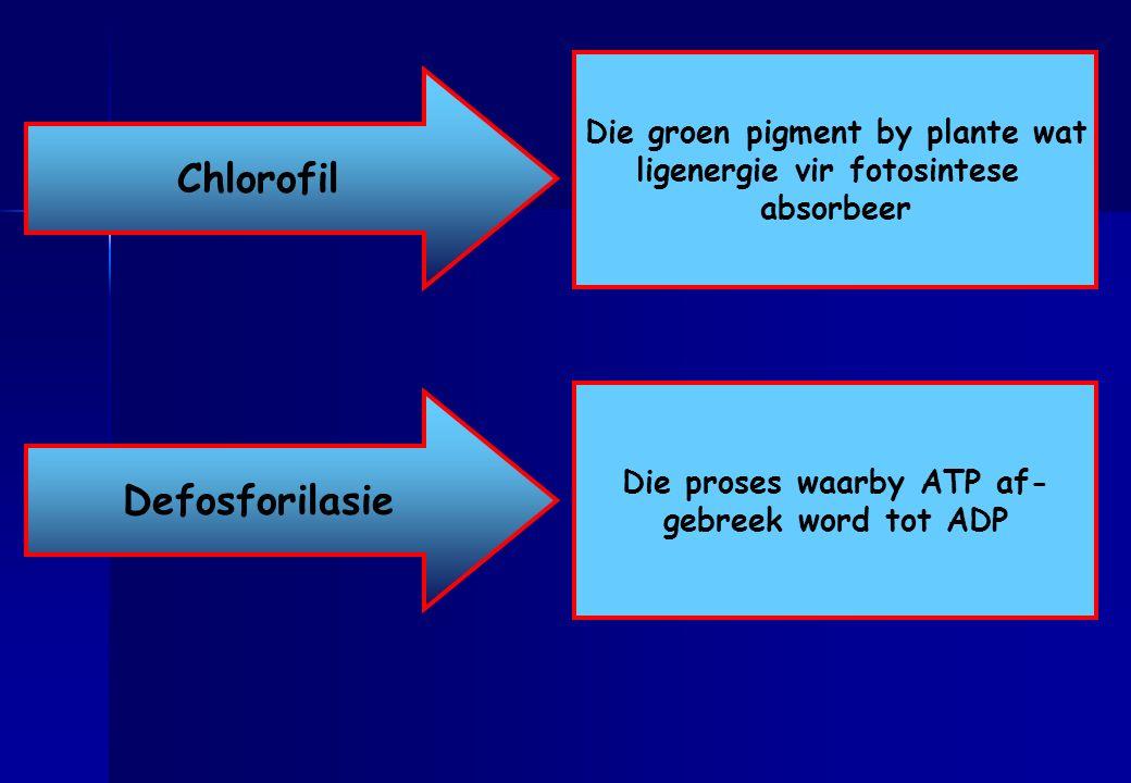 Chlorofil Defosforilasie