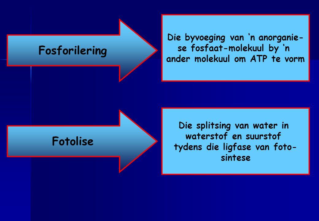 Fosforilering Fotolise