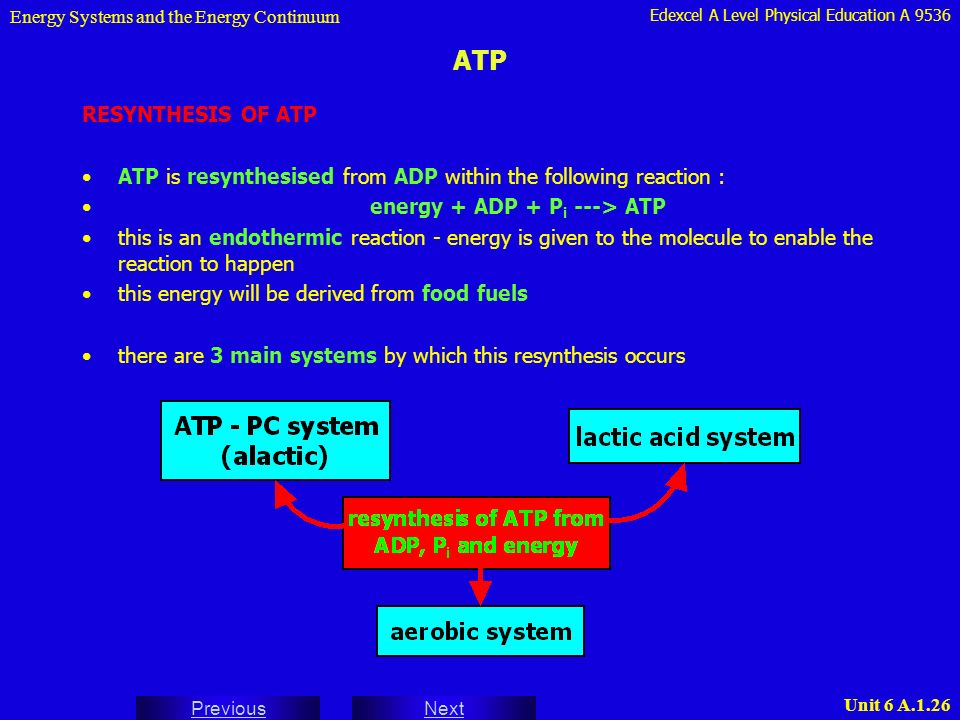 atp resynthesis energy systems Chapter 6 sample answers for the energy systems differ from each other with respect to the rate and the duration of energy 11 the resynthesis of atp by the aerobic system takes place in cell organelles called _____ answer: mitochondria 12.