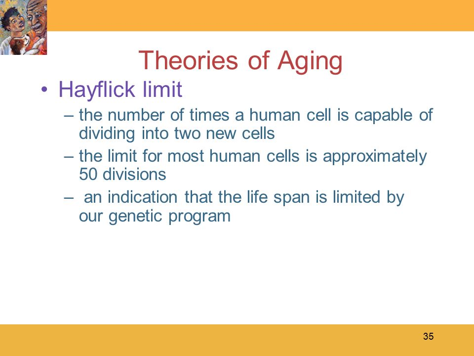 a study on theories of aging in late adulthood Study 47 chapter 9 late adulthood flashcards from sonya b on studyblue  the theory suggesting that successful aging occurs when people maintain the interests .
