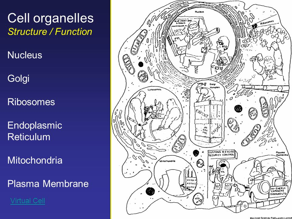 cell nucleus structure and function pdf