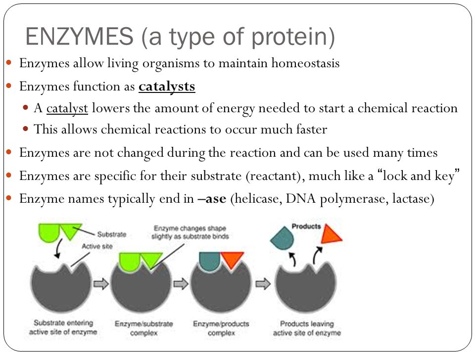 Microbiology - Enzymes Regulation