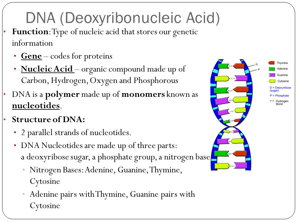 protein nucleic acid interaction pdf