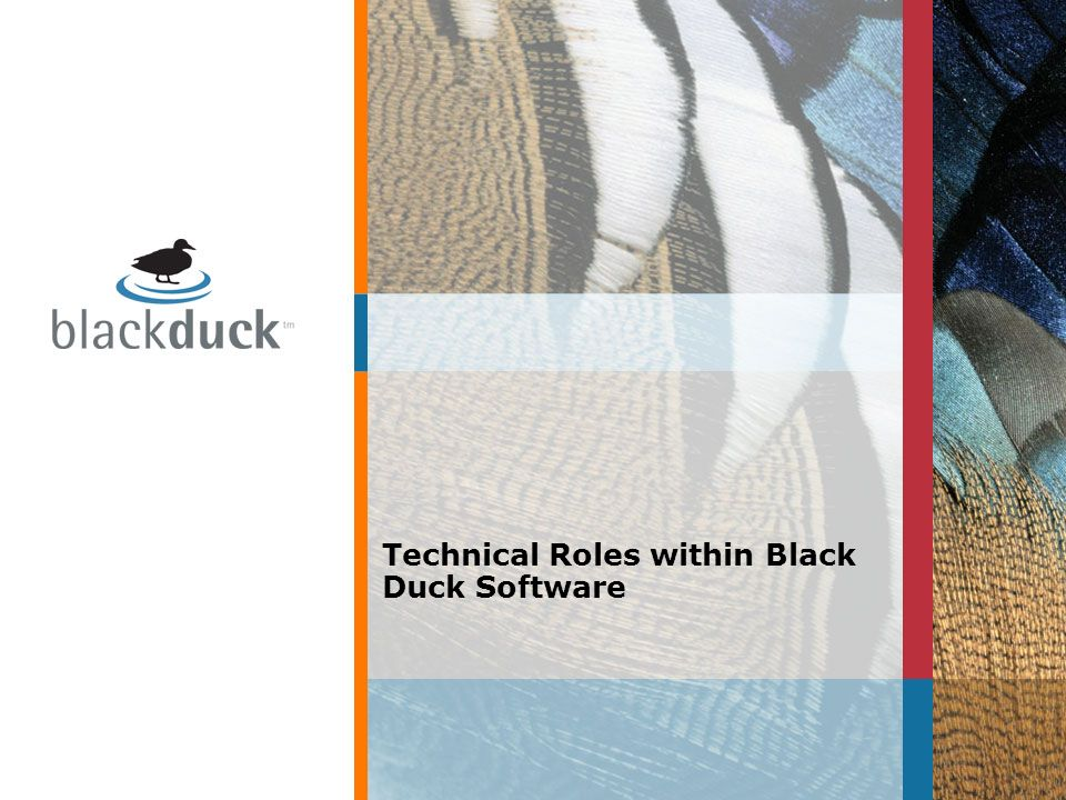 Technical Roles within Black Duck Software