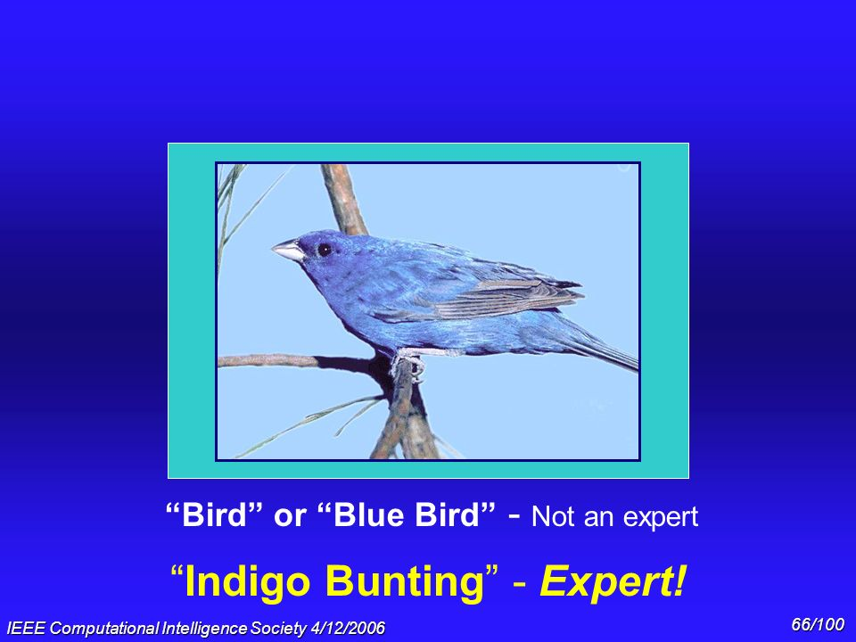 Indigo Bunting - Expert!