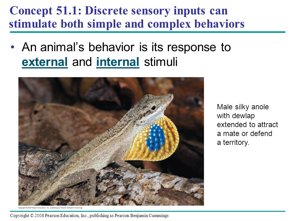 vigilance behavior in animals and its scientific explanations It's loaded with mountains of fine details about various animal cognitive systems and provides thorough explanations of the tests that support the scientific claims even more interesting, she provides a primer in critical thinking about experimental research and findings.
