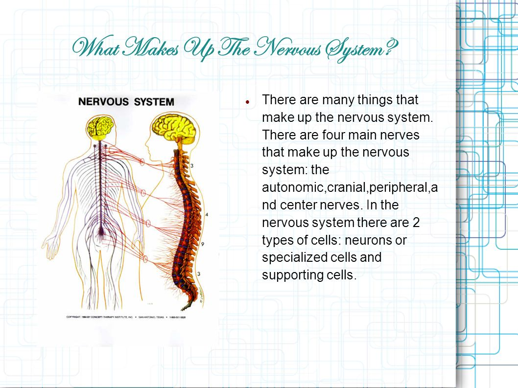 how to make the nervous system interesting