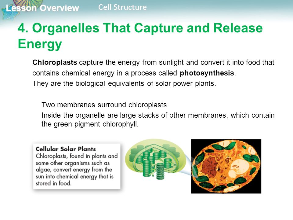conclusion for photosynthesis and solar cell energy