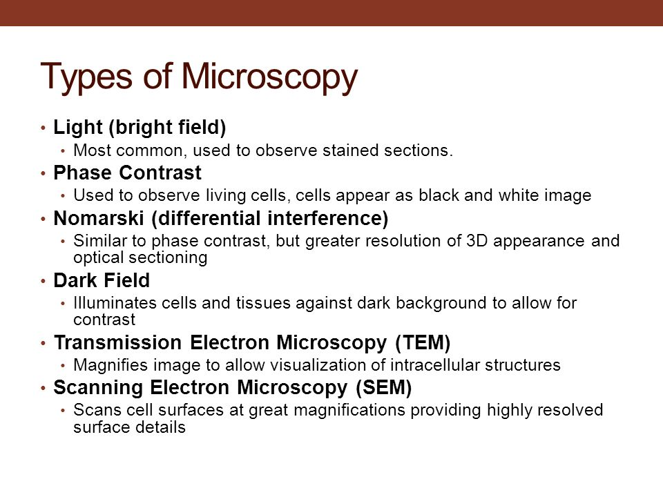Fundamental tissues and mitosis ppt video online download Types of contrast