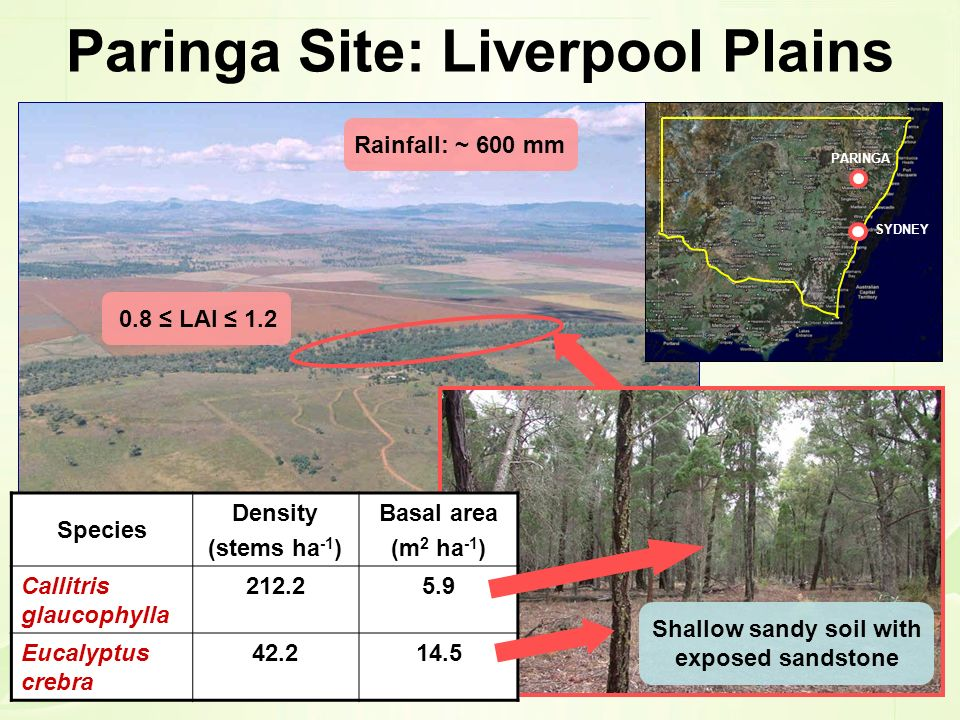 Paringa Site: Liverpool Plains