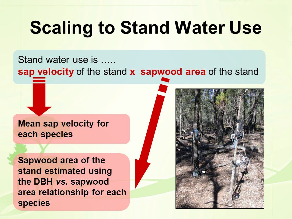 Scaling to Stand Water Use