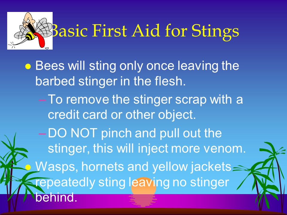 Basic First Aid for Stings