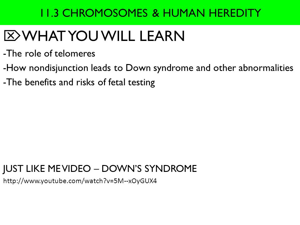 11.3 CHROMOSOMES & HUMAN HEREDITY