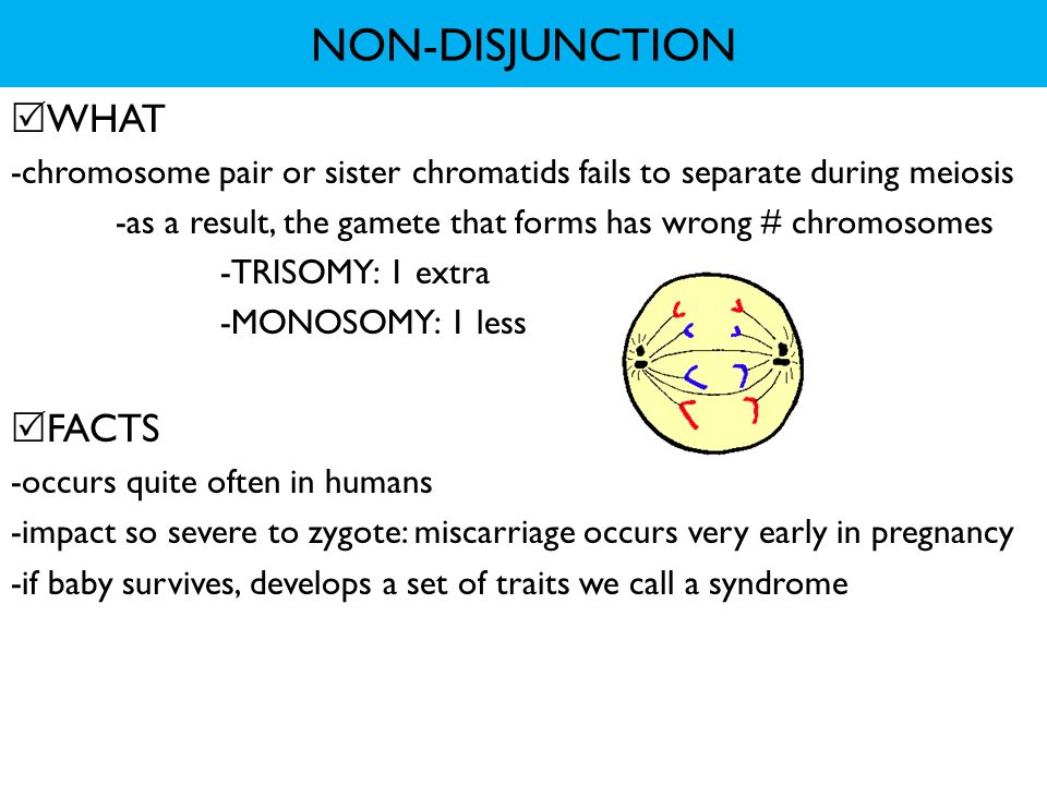 NON-DISJUNCTION WHAT FACTS