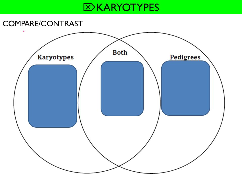 KARYOTYPES COMPARE/CONTRAST