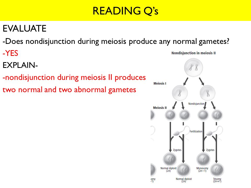 READING Q's EVALUATE. -Does nondisjunction during meiosis produce any normal gametes -YES. EXPLAIN-
