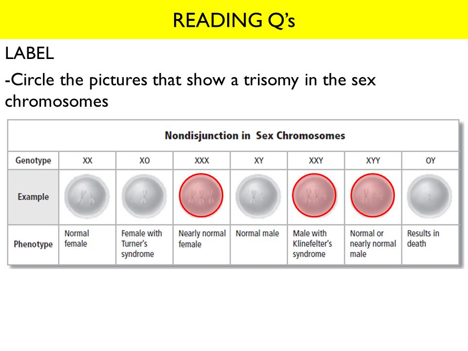 LABEL -Circle the pictures that show a trisomy in the sex chromosomes
