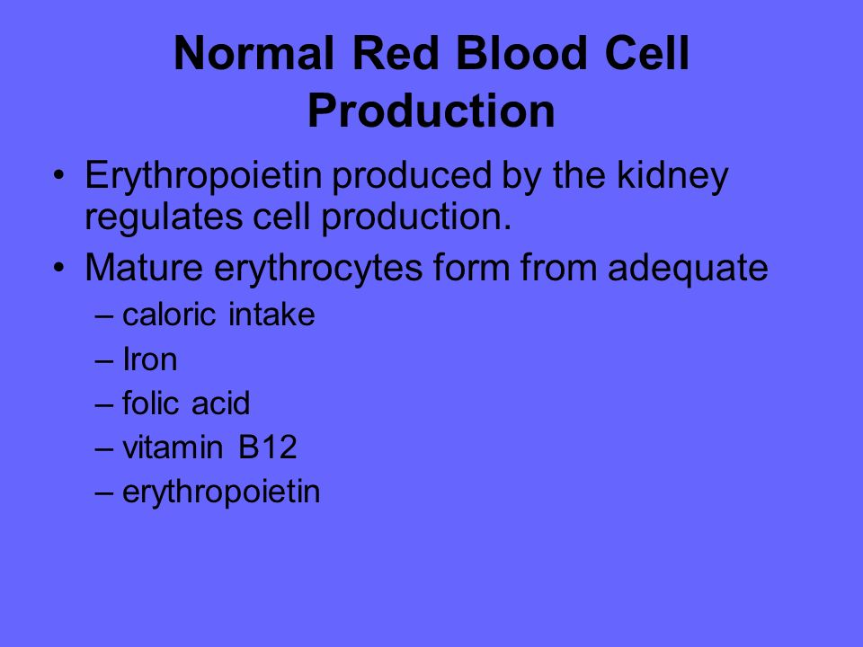 Normal Red Blood Cell Production