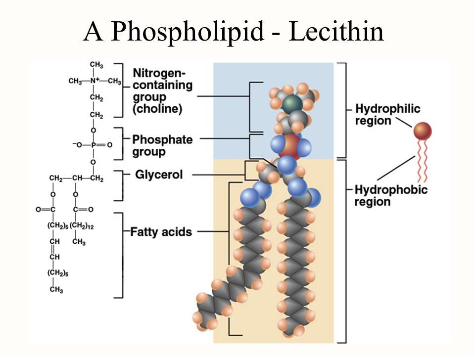download Dictyostelium discoideum Protocols (Methods in Molecular Biology Vol 346)