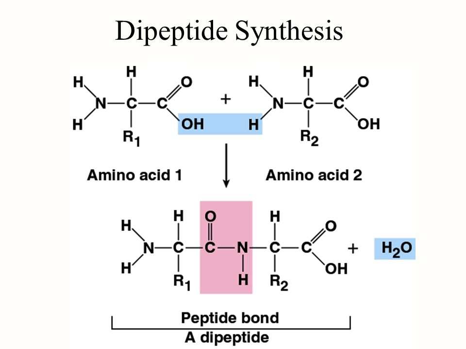 Dipeptide Synthesis