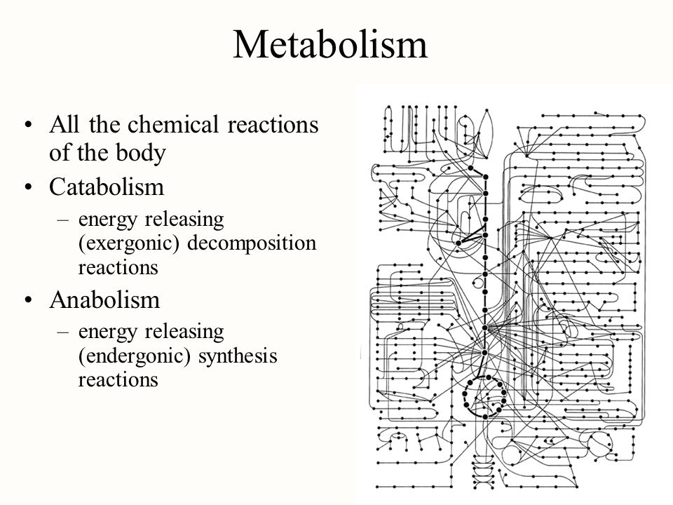 Metabolism All the chemical reactions of the body Catabolism Anabolism
