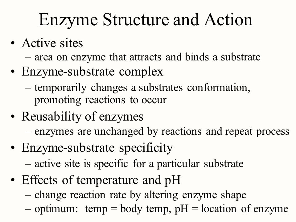 Enzyme Structure and Action
