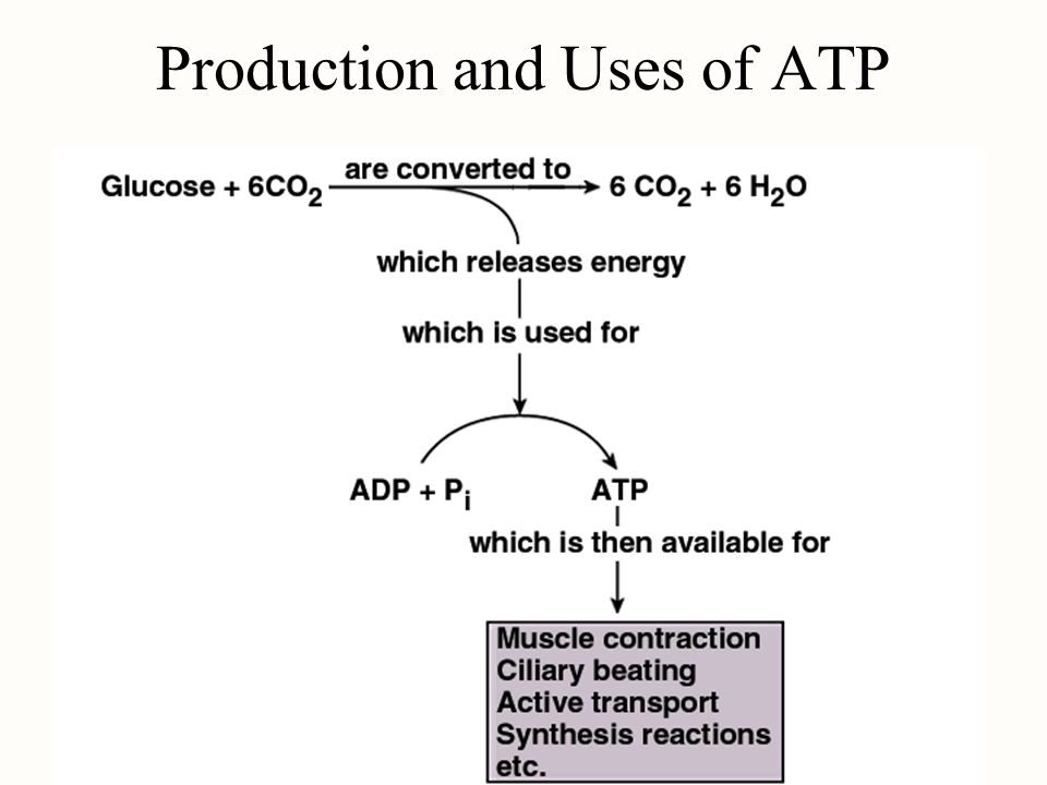 Production and Uses of ATP