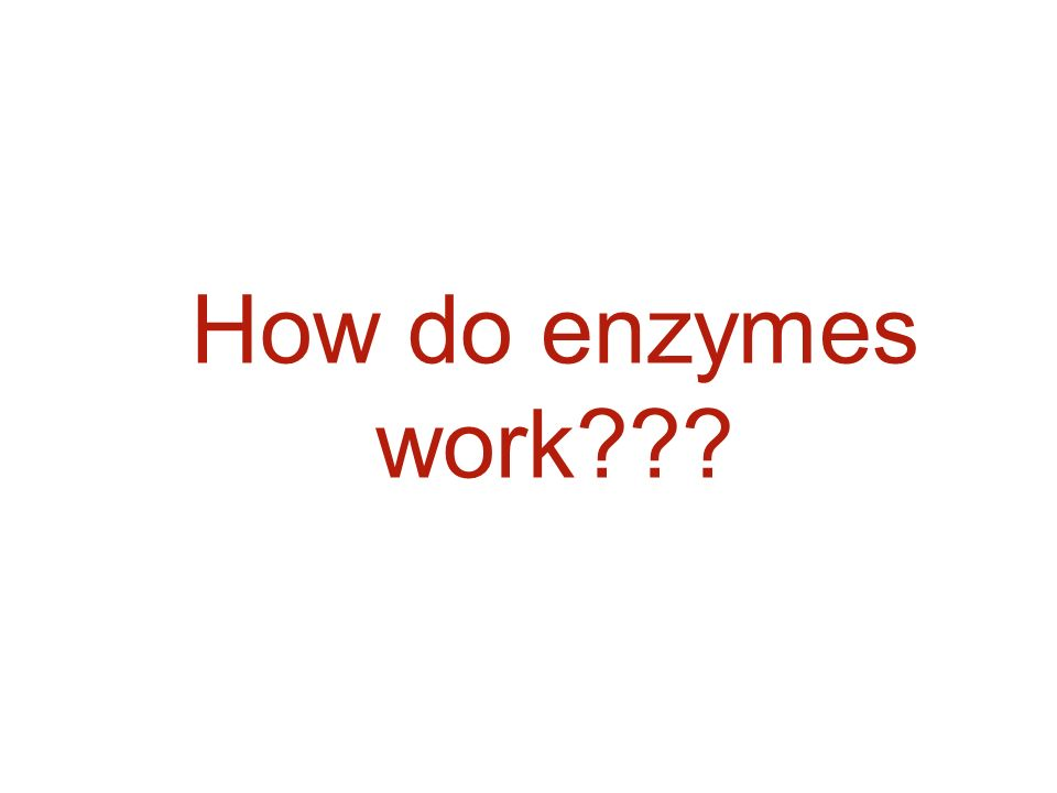 how do enzymes work How do enzymes accelerate chemical reactions how do enzymes achieve their specificity the answer to both questions lies in how enzymes interact with their substrates.